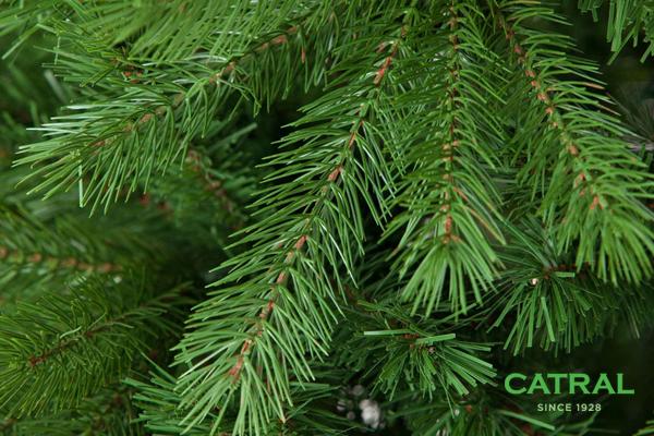 Decorar tu casa en navidad el rbol de navidad catral - Arbol de navidad con ramas ...