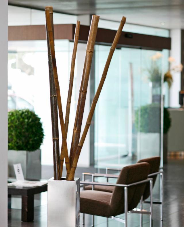 Tutores decorativos Bambú