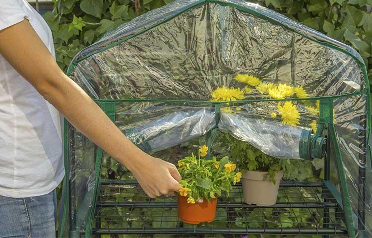 invernadero green house catral montado
