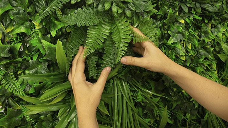 colocacion hojas jardin vertical
