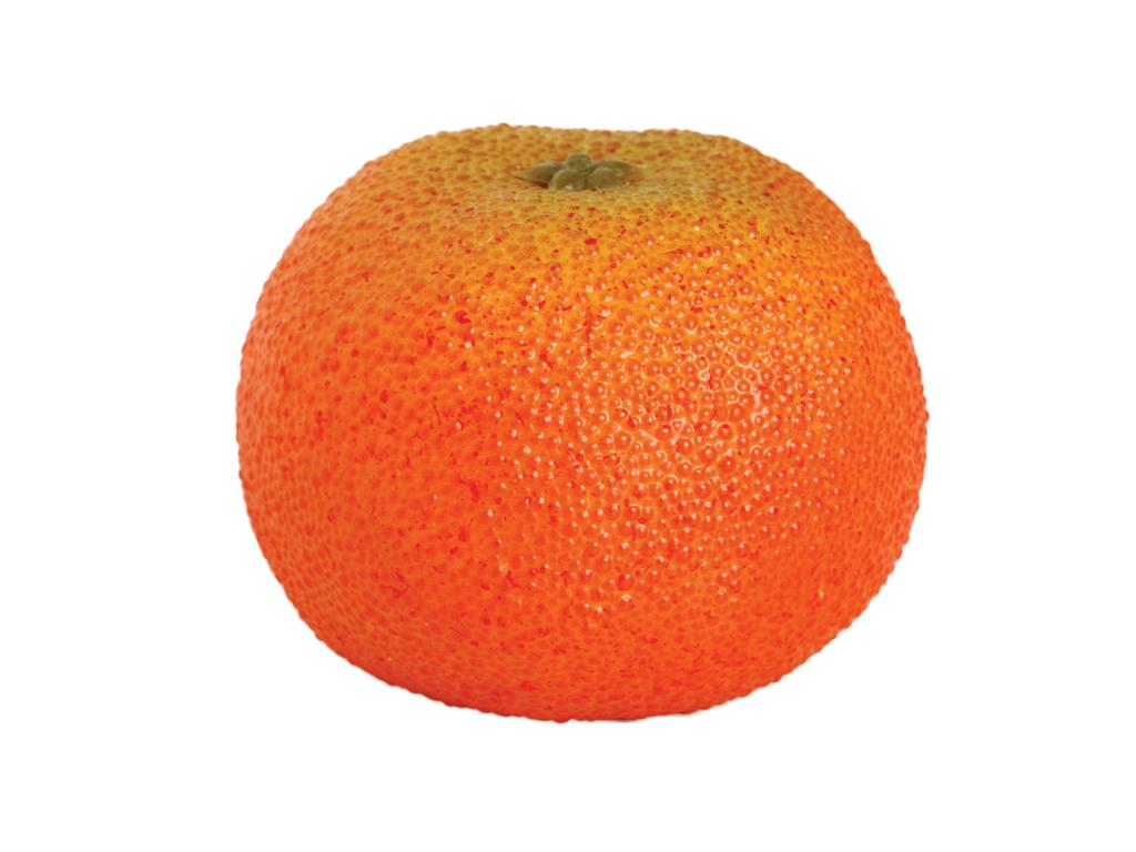 Wrinkled Mandarin