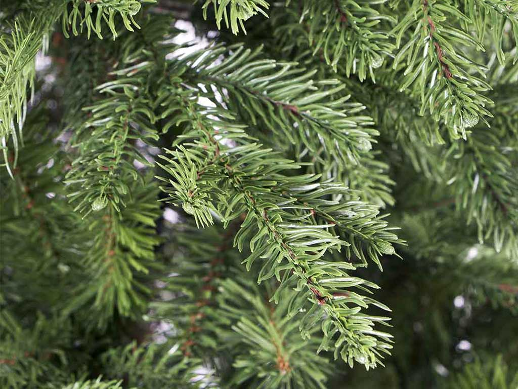 Christmas tree SVEG