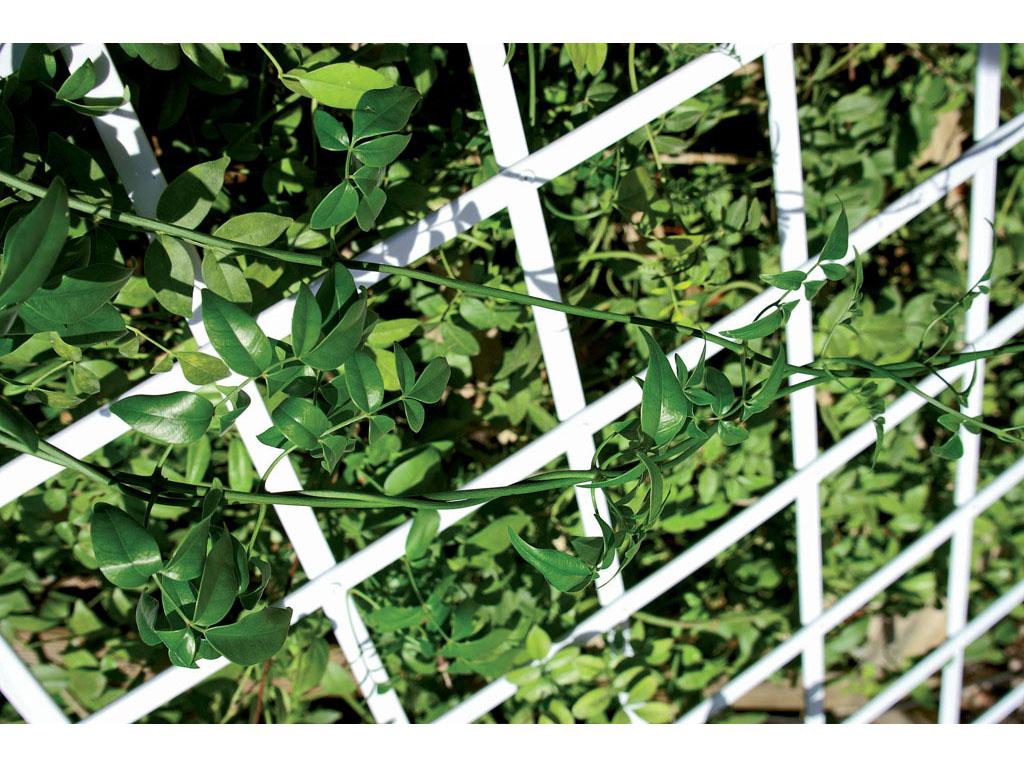 Celos as de pvc para jard n fijas o extensibles for Celosia de madera para jardin